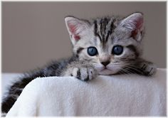 At www.canadapharmacy.com we love pets - shop our wide selection of top pet meds.