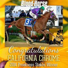 Congratulation Preakness Champion- California Chrome!