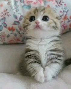 Gato Gif Foto Linda Animal Gato Animals And Pets Kittens Kitty Cat Pictures Funny Cats Fluffy Kittens Dog Cat Cute Funny Animals, Cute Baby Animals, Funny Cats, Humorous Cats, Small Animals, Animals Images, Zoo Animals, Animals And Pets, Cute Cats And Kittens