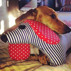 """""""Un can feliz gracias a Sir Cus""""  ♥ Antonella junto al afelpado de wiwi ♥"""
