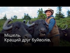 Michel and his Carpathian buffaloes (English subtitles) - YouTube