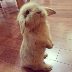 Sitting bunny- I can haz carrot?