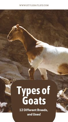 let us learn all about the different kinds and species of goats globally, which we did not know.