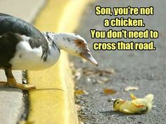 Son, you're not  a chicken. You don't need to cross that road.
