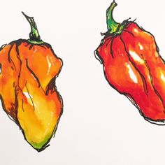 Tracey Fletcher King: Hot Stuff... chilli pepper painting... habaneros chillis watercolour and ink