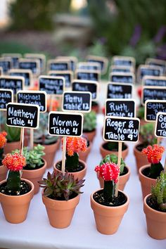 How cute are these miniature pots? Succulents as escort cards are an ideal way to tie in backyard elements to your wedding theme.