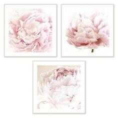 Framed Blush Pink Peonies Art Print Set, 3 Piece ~ Peonies Pink I ~ Galeria Rodrigo Pink Wall Art, Pink Art, Wall Art Sets, Framed Wall Art, Wall Art Prints, Floral Artwork, Floral Wall Art, Bathroom Wall Art, Bathroom Quotes