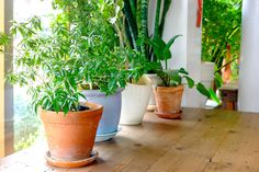 Power plants, as we like to call them, have the ability to remove toxins from the air. View our list of common houseplants that detoxify the air in your home.
