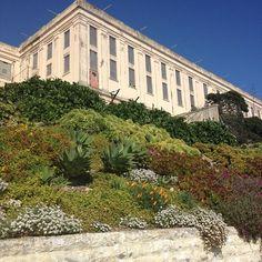 San Francisco part 4 – Alameda flea market & Alcatraz U.s. States, United States, Alameda Flea Market, Abandoned Prisons, Vegas, America Washington, Ca Usa, Snow Skiing, Botanical Gardens