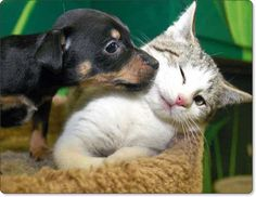 Can you say AAAAWWWWW!  Hugging  Kissing  Headbutting  A very cute collection of animal photos