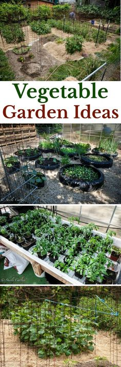 Vegetable Garden Ideas, Straw Bale Gardening, Used Tire Gardens, Gardening, Garden Ideas, Garden Tours