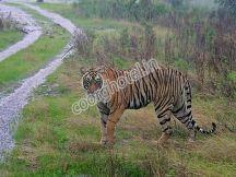 Nagarhole Wildlife Sanctuary, Coorg www.coorg.info
