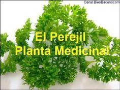 Beneficios del perejil. Descubre cómo beneficia a nuestra salud si utilizamos esta planta medicinalmente y en la cocina. ¡No te lo pierdas!