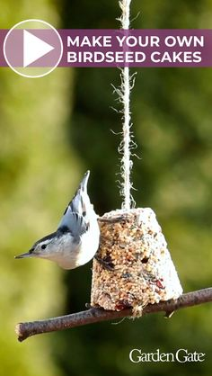 Watch our how-to video to make these homemade birdseed treats # birdfeeder Bird Suet, Bird Seed Feeders, Bird Feeder Craft, Bird Seed Crafts, Bird Seed Ornaments, Bird Cakes, Homemade Bird Feeders, Birds And The Bees, Garden Whimsy