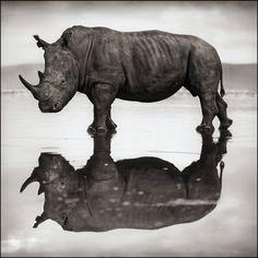 Rhino on Lake Nakuru