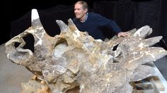 New dinosaur species found in Alberta a 'royal' wonder of evolution