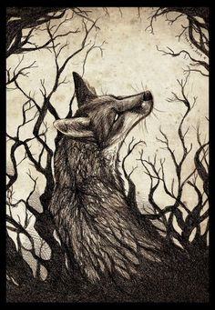 Drawing: Culpeo-Fox on deviantART, February 24, 2009
