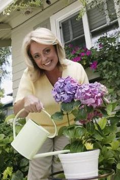 Pinterest the world s catalog of ideas - Care potted hydrangea ...