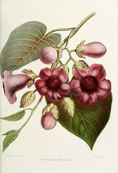 indian flowers