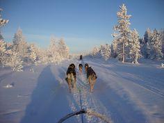 Husky safari in Lapland