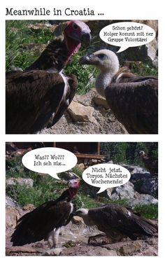 #jenaplan #greifvogelzentrum #schulprojekt