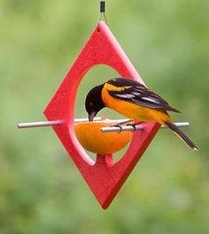 Duncraft.com: Eco-Friendly-Apple-Fruit-Feeder  Northern Oriole