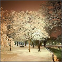 Boston Common in Winter