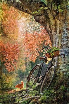Chicken followed the bike...