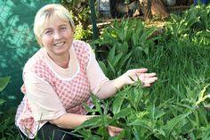 Bylinkárka Anna Kopáčová z Vrbového písala jeden celý rok knihu. Jej prvotina s názvom Zdravie z byliniek, overené recepty obľúbenej bylinkárky, uzrela svetlo sveta krátko pred Vianocami 2018. Kniha má 247 strán, nájdete v nej okrem osvedčených receptúr z byliniek aj návody a rady, ako bojovať proti rôznym ochoreniam. Divas