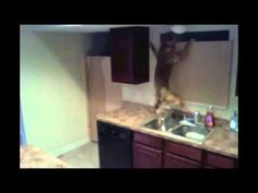 dog escapes from kitchen!