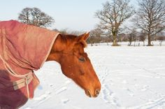 Keeping Weight on Horses Through Winter