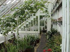 THE RESTORED GREENHOUSES,HELIGAN,Cornwall