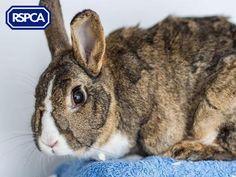 Mollie, Dutch rabbit, 2 Years, RSPCA Derby and District Branch Dutch Rabbit, Pet Search, Sadie, Bunnies, Derby, Adoption, Wildlife, Pets, Shop