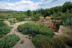 A stone-lined retention pond encircled by drought-tolerant plants. Design With Nature.