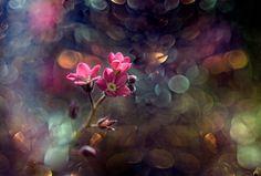 Гармония момента — Фото | OK.RU