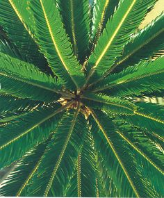 texture focal point: i chose this pin because it's focused on the texture of the leaves on this plant Tahiti, Beach Bodys, Photography Beach, Life Hacks, No Bad Days, Palmiers, Belleza Natural, Tropical Paradise, Boho