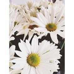 #flor #flores #margaridas