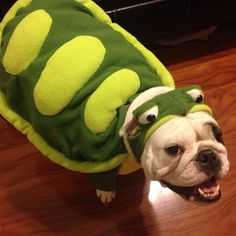 #ThrowbackThursday of Prudence as a Turtle  Happy Halloween everyone! #Padgram