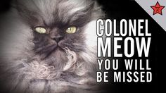 R.I.P. COLONEL MEOW, YOU WILL BE MISSED// SOOOO SAD!!!!!! I LOVED THIS CAT!!!!!! ♥R.I.P.♥