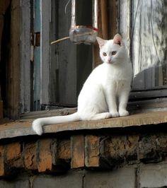 Cat in the window....