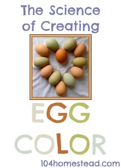 The Science of Creating Egg Color: How to mix breeds to create a specific or new… Chicken Egg Colors, Chicken Eggs, Chicken Lady, Fresh Chicken, Keeping Chickens, Raising Chickens, Pet Chickens, Backyard Poultry, Chickens Backyard