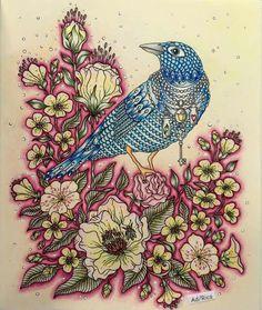 Colourist Adriana