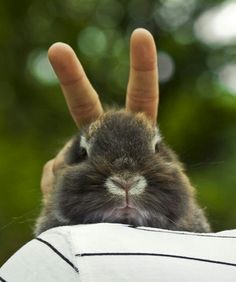 Totally doing this if I ever get a bunny! :3
