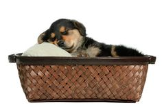 Dog keeping you from a good night's sleep? With just a few easy pointers, you can ensure that both you and your dog get all the rest you need.  1. With a new puppy, it is very important to establish