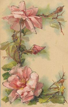 T11 1907 Postcard Catherine Klein Floral Artist Signed Alphabet Letter E | eBay