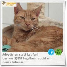Lizy aus dem Tierheim Ingelheim sucht ein neues Zuhause.  http://www.tierheimhelden.de/katze/tierheim-ingelheim/ekh/lizy/8015-1/