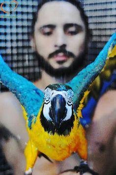 www.BEAnimal.com.br   Preparing another post about the importance of bathing your bird /   preparando mais um post sobre a importância de banhar suas aves.  #animalwelfare #BemEstarAnimal #Bird #bath #banho #EducaçãoAmbiental #environmentaleducation #Bird #petbird #pet #avetreinada #aves #trainedbird