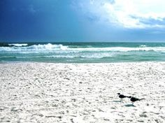 Gulls by the Gulf: fine art photograph print of Gulf of Mexico seascape with two birds (seagulls), white beach, ocean waves, blue sky