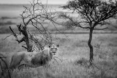 Photo feature - Tarry Butcher - Travel News Namibia Travel News, Travel Guide, Photography, Animals, Photograph, Animales, Animaux, Travel Guide Books, Fotografie