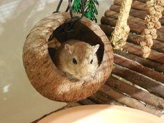 Beschäftigungstipps Employment tips Big Hamster Cages, Diy Hamster Toys, Hamster House, Hamster Stuff, Habitat Du Hamster, Hamster Species, Pet Hammock, Cat Grass, Degu